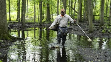 Photo of Mosquito season in Morris County — Remove standing water