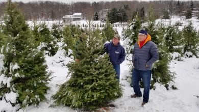 Photo of N.J. Agriculture Secretary kicks off choose and cut Christmas tree season in Blairstown Twp.