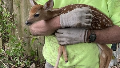 Photo of VIDEO: Firefighters, police officers rescue baby deer stuck in hole in Hackettstown