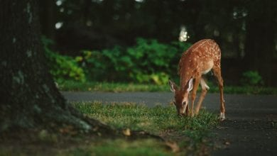 Photo of NJDOT, DEP remind drivers to be extra cautious as deer mating season begins, daylight hours get shorter