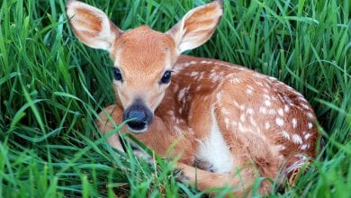 Photo of New Jersey wildlife officials: Leave fawns, other young wildlife alone