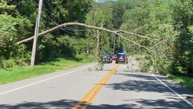 Photo of Willow Grove Street reopens after downed tree, power lines cleared