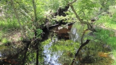 Photo of NJ DEP adopts new protections for 600 miles of rivers and streams