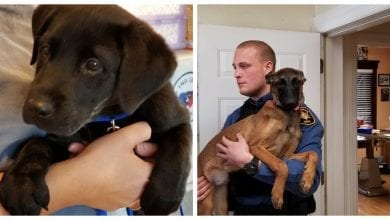 Photo of 2 Morris County K-9 puppies named for officers who died in line of duty