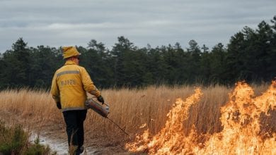 Photo of NJ Forest Fire Service prescribed burning program underway to help reduce wildfire risk