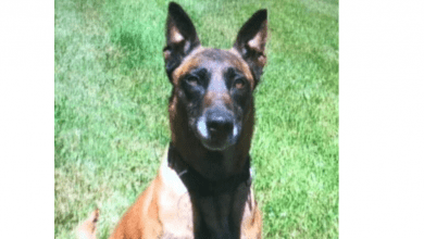 Photo of NJ State Police K-9 Penny assists in 2 traffic stops; 7 arrests