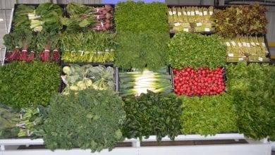 Photo of USDA announces more crops eligible for coronavirus food assistance program