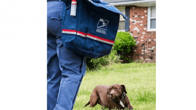 Photo of USPS: New Jersey ranks 9th nationwide in number of dog bite attacks on mail carriers