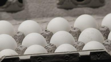 Photo of USDA modernizes egg products inspection