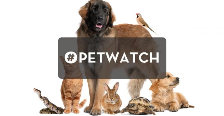 WRNJ Radio Pet Watch | Hackettstown, NJ News