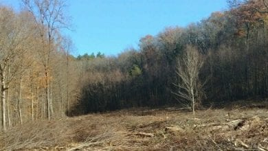 Photo of Creating early successional forest habitat at Flatbrook-Roy WMA in Sussex County
