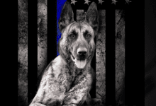 Photo of Hackettstown police launch GoFundMe campaign to continue K9 unit after sudden death of K9 Jada