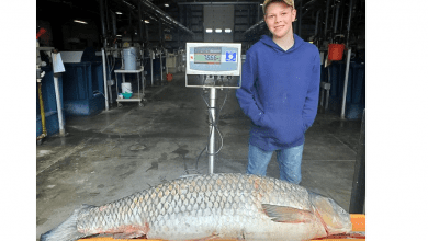 Photo of 2 record-breaking fish caught in New Jersey