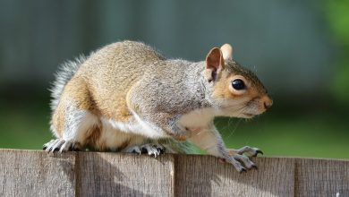 Photo of Squirrel attacks man in Warren County