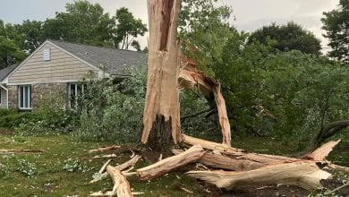 Photo of Storm brings down tree, causes power outage in Hackettstown (PHOTOS)